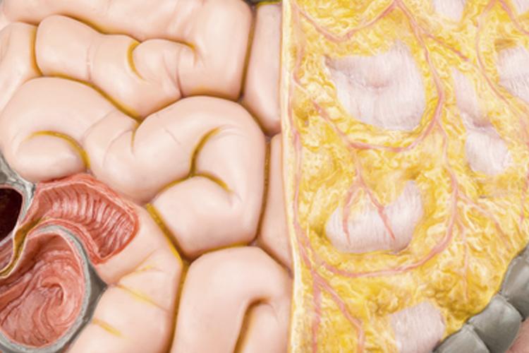 Diferença entre coloproctologia e proctologia